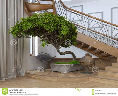 bonsai tree in the interior of a house with