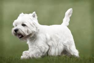 small breeds that don t shed best large breed puppy