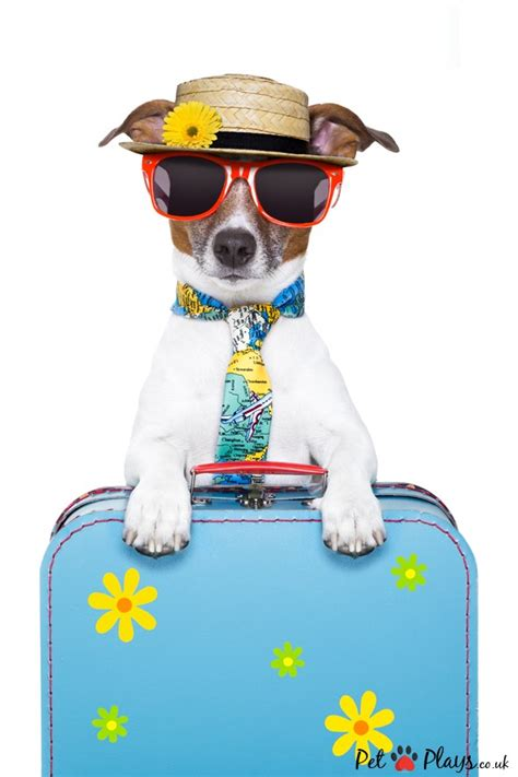 traveling with dogs traveling with your pet are his bags packed for the journey pet plays