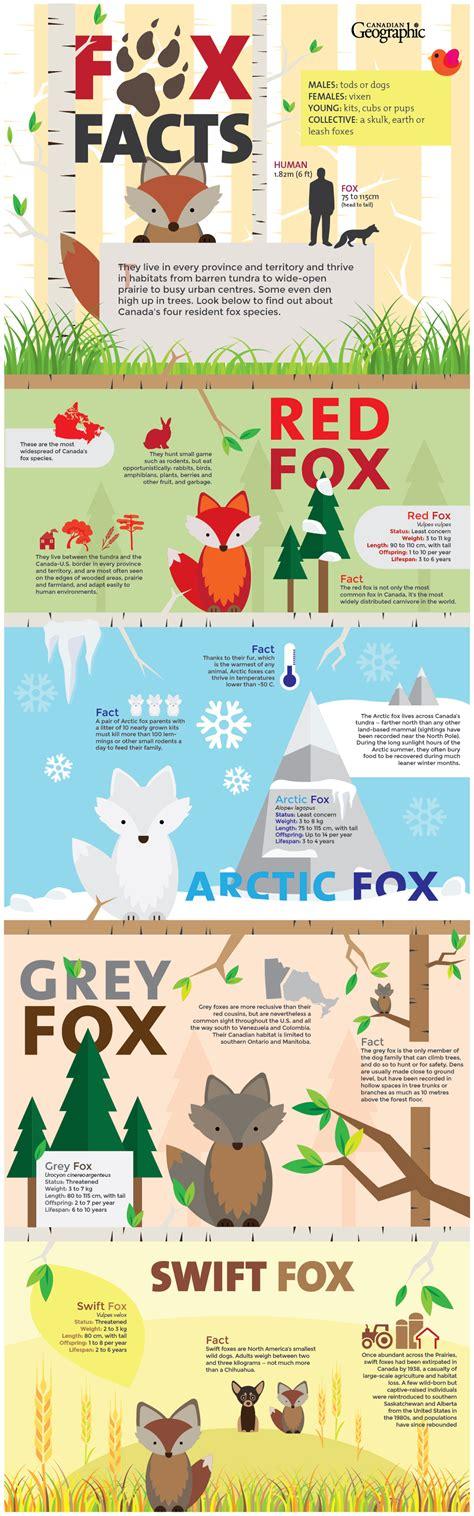 infographics animal kingdom 1848776543 infographic alissa dicaire nick walker animal kingdom nick walker infographic
