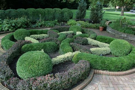 Boxwood Planters by Growing Boxwood Tips For Caring For Boxwood Plants