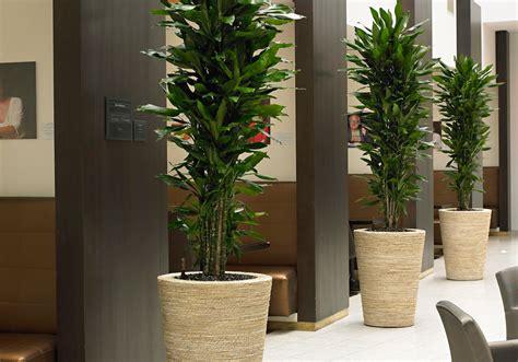 piante di interno piante in idrocoltura idee per il design della casa