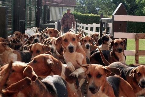 lots of dogs lots of dogs for the of dogs