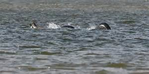 Some people think this new photo of the loch ness monster is totally