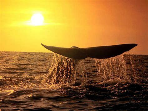 imagenes extraordinarias hd ballena wallpapers gratis imagenes paisajes fondos