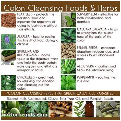 Herbs To Detox Your by Colon Cleansing Food Herbs Health