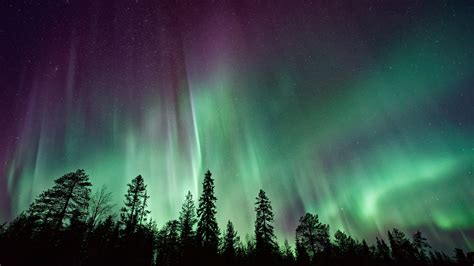 wallpaper northern lights forest aurora borealis