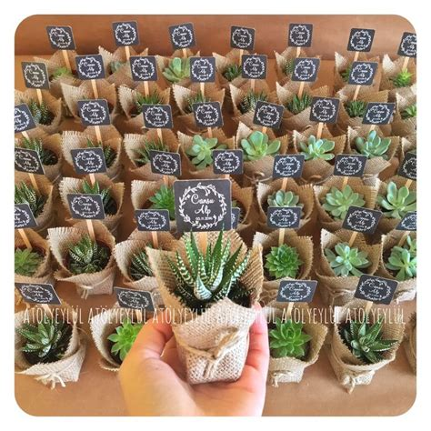 Wedding Gift Plant by Best 25 Succulent Favors Ideas On