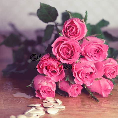 roses   Stardoll Photo (34551178)   Fanpop