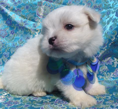 buttercup puppies parvo other doggie diseases welcome to buttercup puppies holistically raised