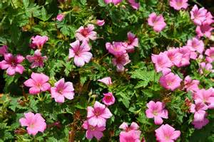 Garden Flowering Plants 7 Top Tips For Saving Money In The Garden This Home