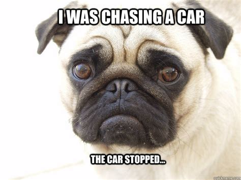 Depressed Pug Meme - i was chasing a car the car stopped sad pug quickmeme