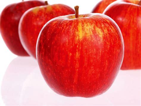 Apple Fruit | agrihunt apple fruit