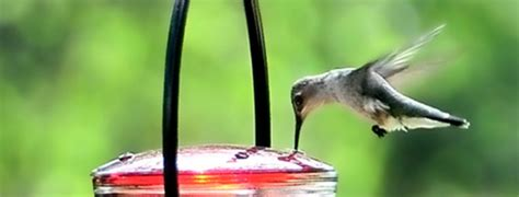 10 easy ways to keep ants out of hummingbird feeder pest