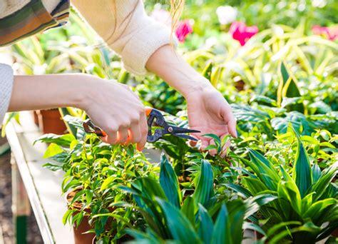 Cura Delle Piante by Cura Delle Piante Garden Ortoflor Binago