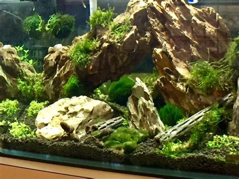 dragon stone aquascape aquascaping the aquarium march 2017 aquarium trends
