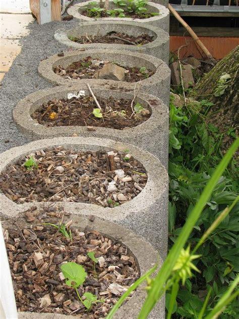 mein schöner garten forum pflanzringe setzen pflanzsteine setzen anleitung f r ihre