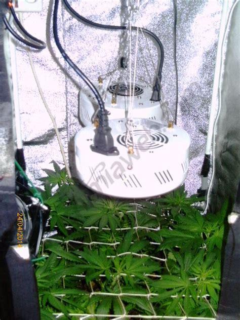 mini chambre de culture cultiver du cannabis en espaces r 233 duits du growshop