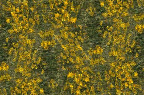 wildflower background yellow wildflower background free stock photo