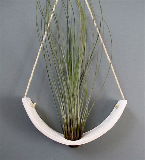 Hanging Air Plant | how to care for air plants