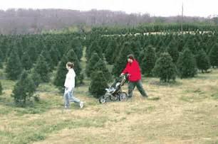south carolina christmas tree association growing you