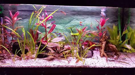 Aquarium 80 Cm By Arlicho mijn eheim aquarium 80 cm