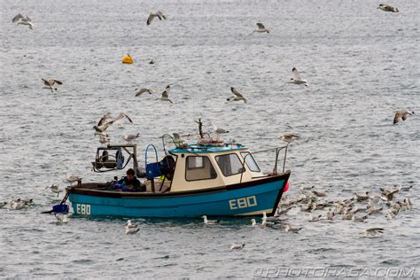 fishing boat photos fishing boat surrounded by seagulls photorasa free hd photos