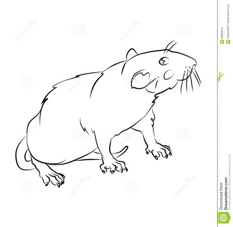coloring book not on datpiff black and white rat image stock vector image 69603816