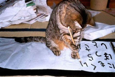 Cat Essay Writer by Cat Quiz The Weekly Cat