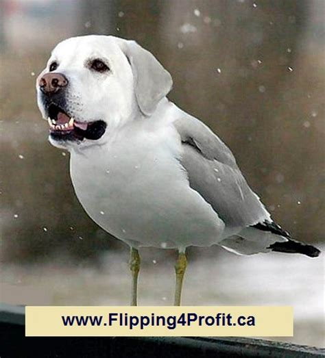 how to bird dogs how to find bird dogs