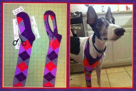 kelleys dog blog leg protectors