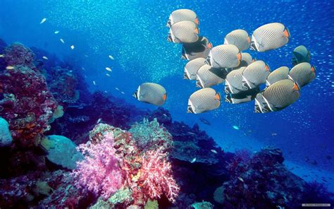 marine life wallpaper gallery
