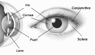 outer eye diagram human eye anatomy structure of the eye