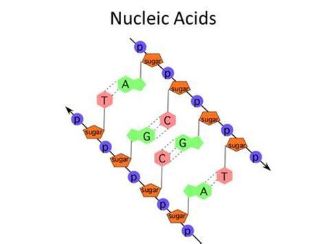 carbohydrates contain carbohydrates contain these elements ketogenicdietpdf