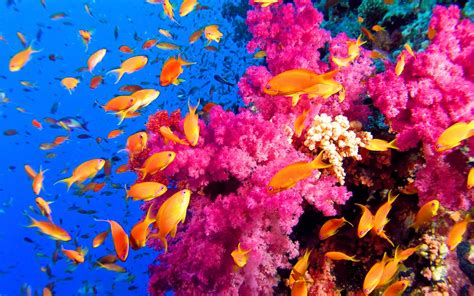most beautiful colors genesis nature blog coral reef habitats