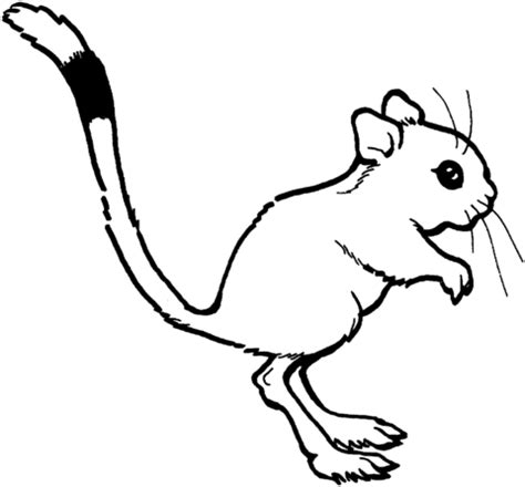 kangaroo rat coloring page 301 moved permanently