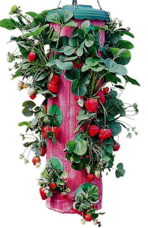 food hydroponics upside down strawberry planter