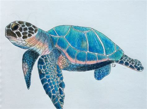 turtles colors sea turtle by elizabethhudy my drawings diy projects