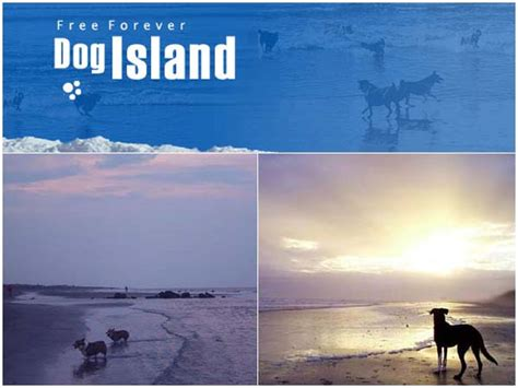 puppies island www thedogisland avoision avoision