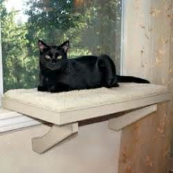 cat seat for window imagine scruffy not a cat a scruffy window seat he