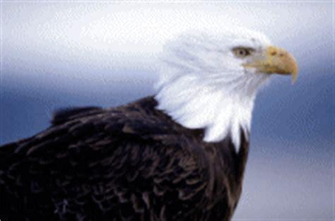 membuat gif dari video rahmian4 koleksi gambar gif jenis burung