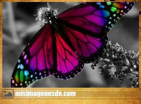 imagenes de mariposas juntas imagenes de mariposas im 225 genes