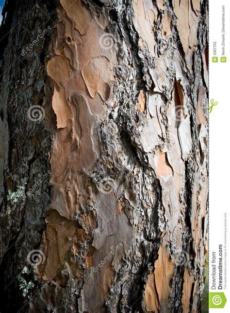 bark of pine tree stock photos image 5367703