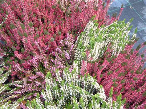 fiori per bordure basse la finestra di stefania tutte le piante possibili per fare
