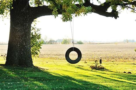 tire swing tree royalty free tire swing pictures images and stock photos
