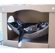 Cat Hammock In A Box