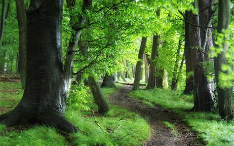 image gallery tree path