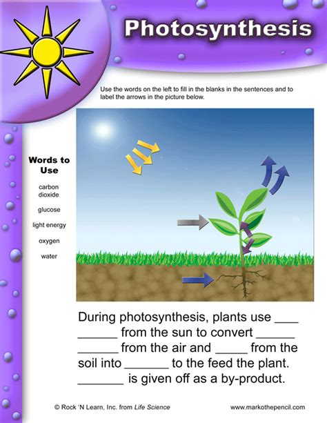 photosynthesis diagrams photosynthesis diagrams worksheet answers worksheets