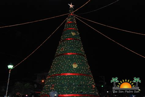 what tree holds lights better san pedro holds tree lighting ceremony the san pedro sun