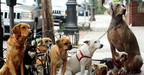 tv producers claws    pet shelter ny